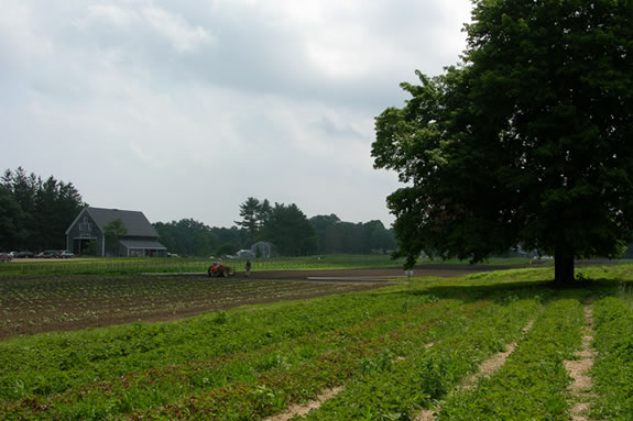 Appleton Farms in Ipswich, Ma is America's oldest continuously operating farm.
