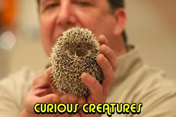 CAM Kids meets on the second Saturday monthly at Cape Ann Museum in Gloucester. July's session will feature Curious Creatures