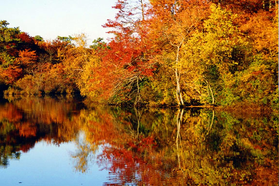 Come see fall foliage from a different perspective on the Fall Foliage Paddle.
