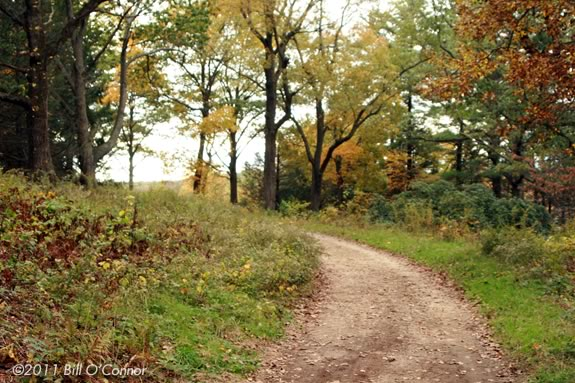 Join the park interpreter on a hike through the trails of Maudslay State Park in Newburyport!
