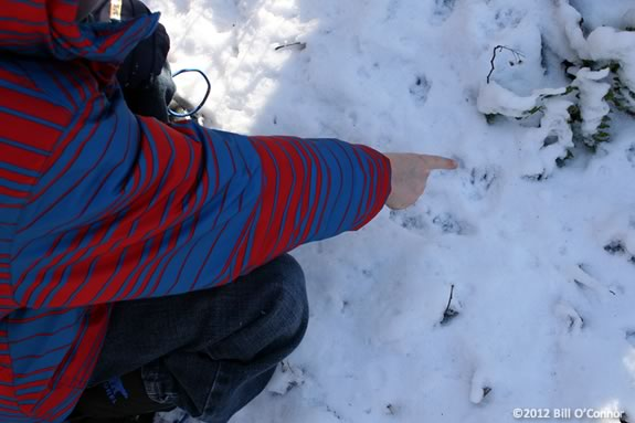 Kids will identifiy tracks in the snow and learn aboutthe animals that made them