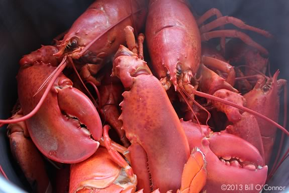 Lobster, Chowder, Summer fun at Lynch Park - part of Beverly Massachusetts homecoming!