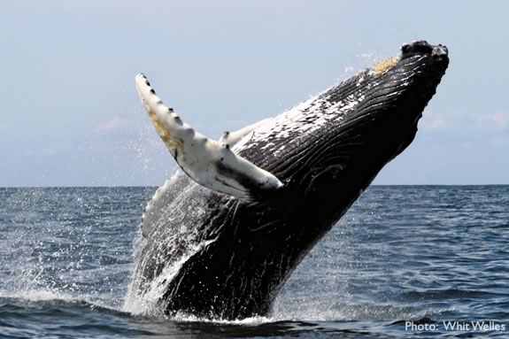 Kids will learn about whales at the Parker River National Wildlife Refuge in Newburyport.