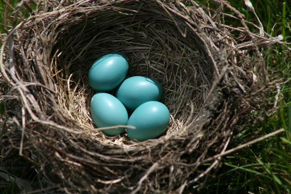 Learn how birds make their nests, then make your own!
