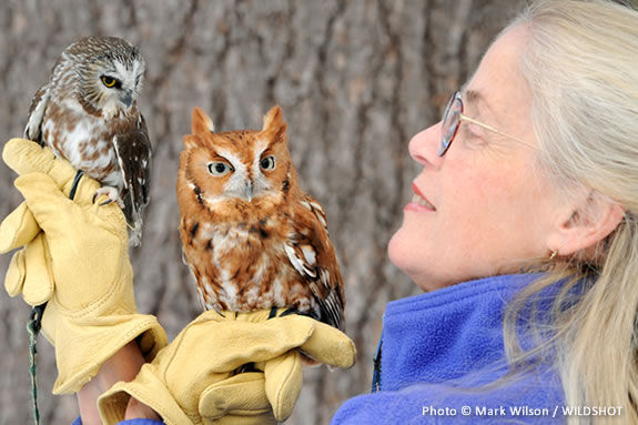 This year's Audubon Nature Festival 2011 features live owl demonstrations