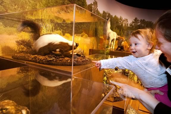 The New England Forest Exhibit at Harvard's Museum of Natural History