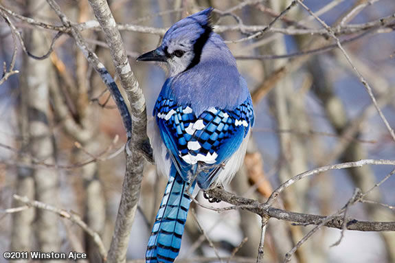 Learn about the birds that stay & survive the Winter in New England!