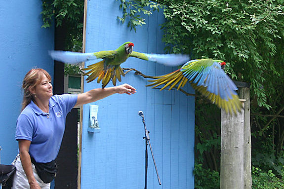 Stone Zoo New England Bird Show exhibit Summer Program Event northshore children