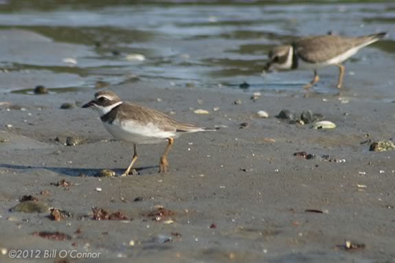Kids will learn about shorebirds and how they use the beach habitat at ISL