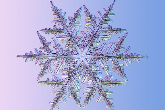 Frozen Crystals: Exploring Ice and Snow at Maritime Gloucester