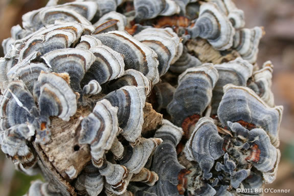 Find out everything about fungus and become a fungus detective at IRWS!