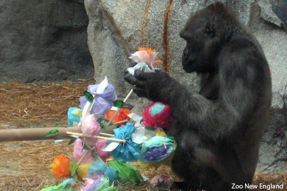 Enrichment Day at Franklin Park Zoo! Events at Massachusetts Zoo New England