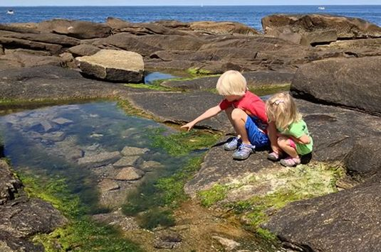 The Tidepools at Halibut Point State Park are some of the best in New England!