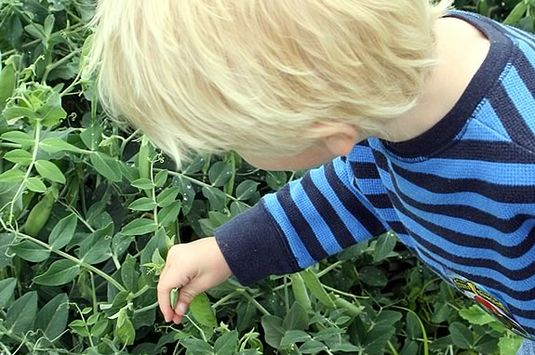 Picking vegetables is just one of the activities kids will enjoy at Long Hill Ga
