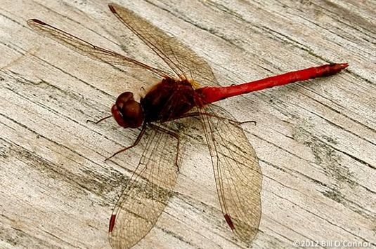 Kids will explore and learn about the dragonflies at Halibut Point State Park.