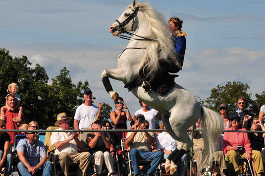Herrmann's Royal Lipizzan Stallions come to Cogswell's Grant in Essex