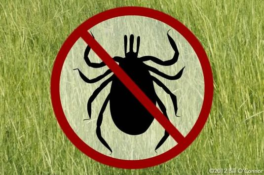 After a walk in the woods, check for ticks before getting in the car!