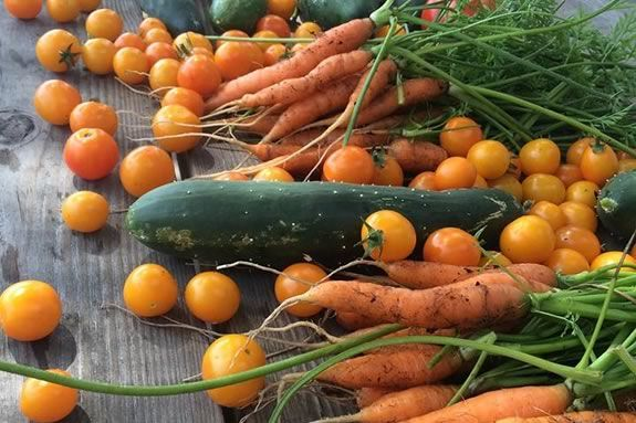 Celebrate sustainable living with Backyard Growers Program in Gloucester MA