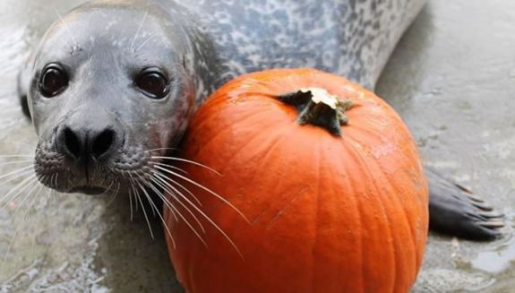 Boo at the Buttonwood Zoo