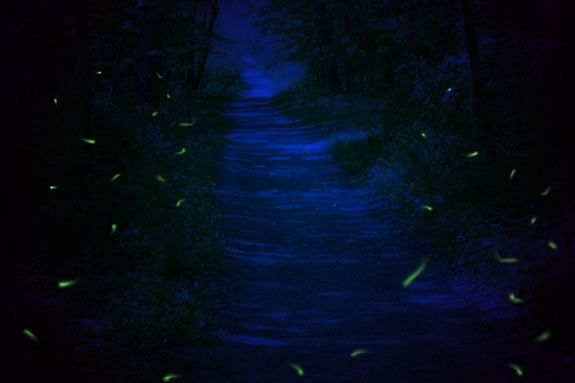 Come learn about fireflies at Bradley Palmer State Park!