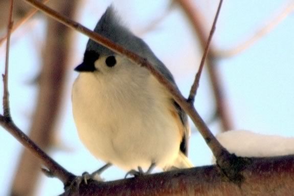 Come visit Ipswich River Wildlife Sanctuary and learn about winter birds!