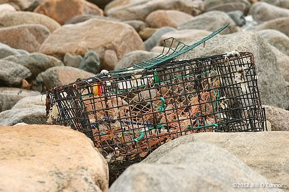 Some coastal trash is accidental like this lobster pot washed up by a storm.