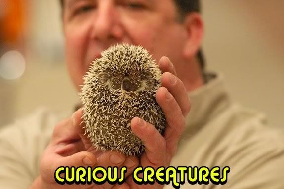 Curious Creatures will put on a free prestation at the Sawyer Free Library Gloucester!