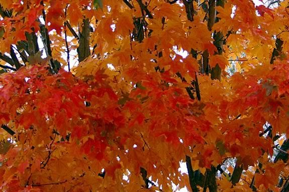 Kids will have fun expressing themselves using autumn leaves at Joppa Flats.