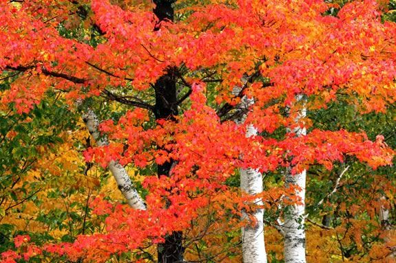 Come to Breakheart Reservation in Saugus to celebrate the arrival of Fall!