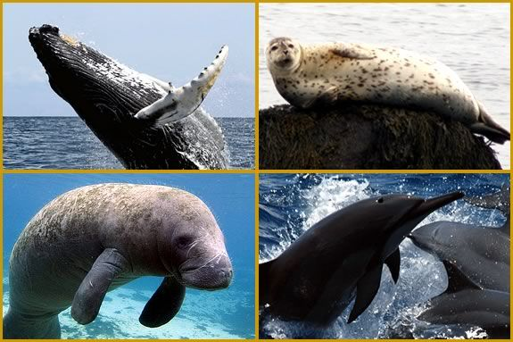 Learn about animals with flippers, their similarities and differences!
