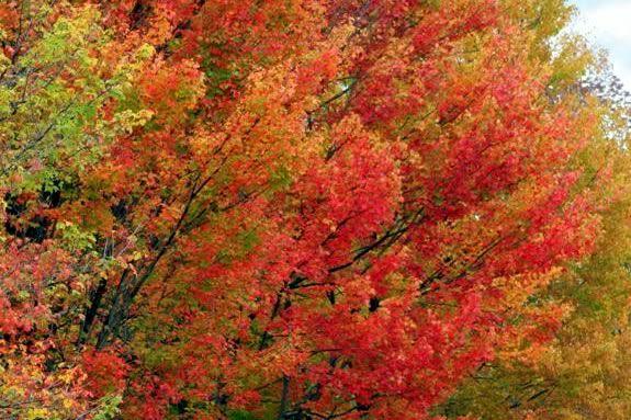 Fall Foliage Day at Ward Reservation