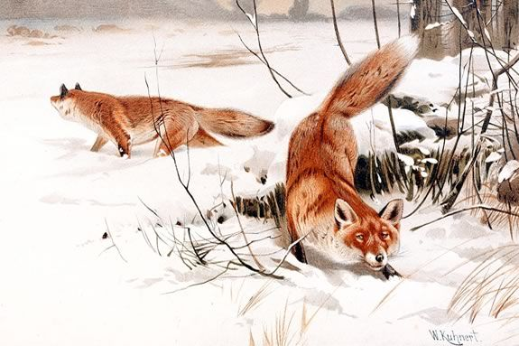 Sense of Wonder Walk: Red Fox and Friends at IRWS. Image of Public Domain painting by Wilhelm Kuhnert