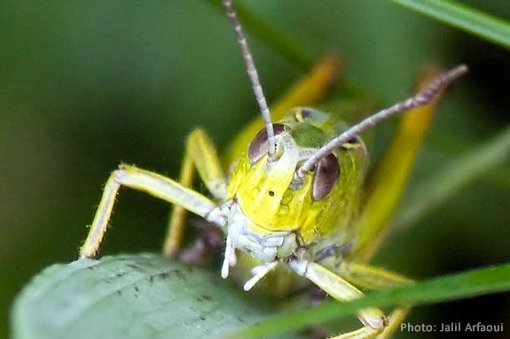 Learn about crickets and grasshoppers at Ipswich River Sanctuary!