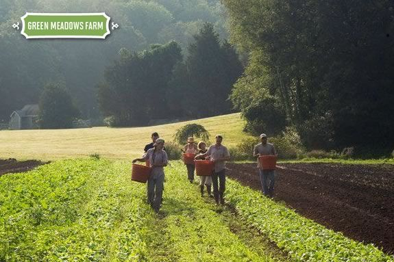 Green Meadows CSA shares are a great source for locally grown organic produce!