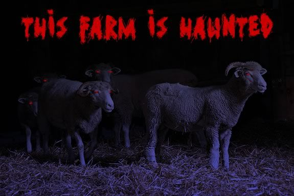 Is Green Meadows Farm Haunted?  Coem find out and enjoy some Halloween Fun  on t