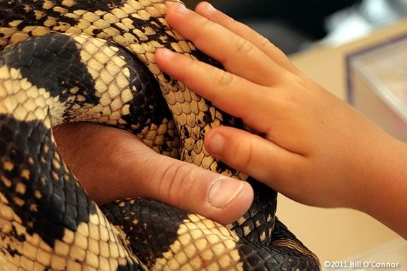 Rockport Library hosts a Reptiles Rock, an interactive live animal program