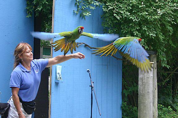 Stone Zoo New England Bird Show exhibit Summer Program Event northshore children