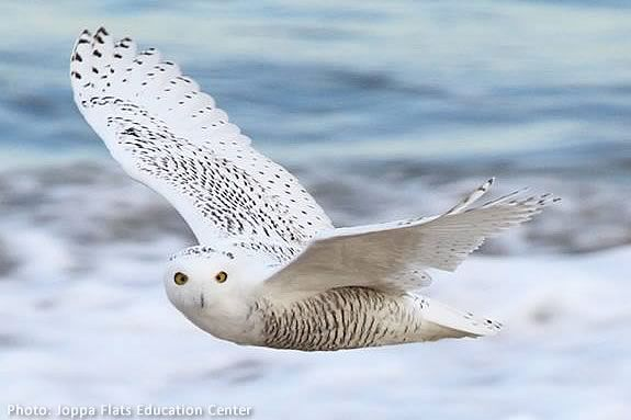 Kids will learn about winter raptors at the Joppa Flats Center in Newburyport!