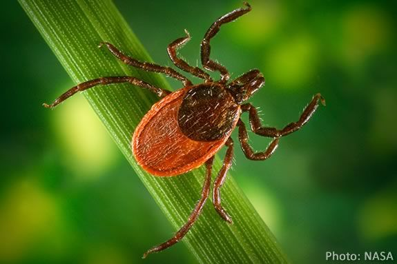 Learn about Lyme diease and the ticks that spread them at Newburyport Library