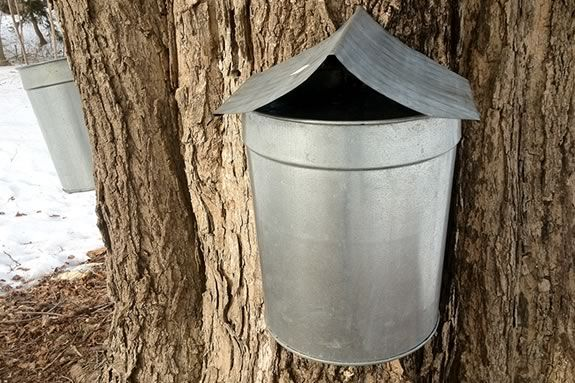 Teens will learn about maple sugaring at Appleton Farms in Ipswich MA!