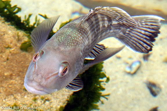 Kids will learn about what makes a fish a fish at Maritime Gloucester!