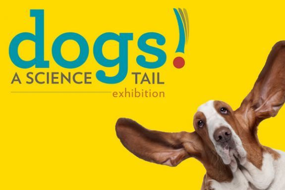 Museum of Science Dogs! A Science Tail Exhibition- Cambridge