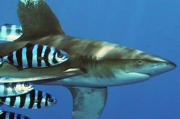 Kids will learn about strange partnerships in nature like sharks andf pilot fish
