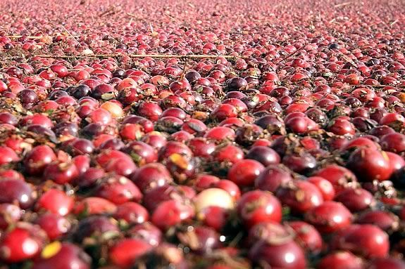 Enjoy Sampling natures harvest from cranberries to seaweed salad at Joppa Flats