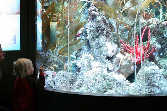 Activities, stories and live animal presentations await at NEAQ's Aqua Kids Days