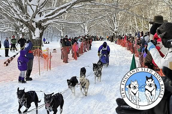 The N.E. Dog Sled Races are a great way for the family to get outside in January