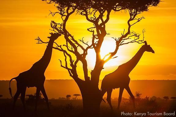 NYS Kenya Trip Information Night