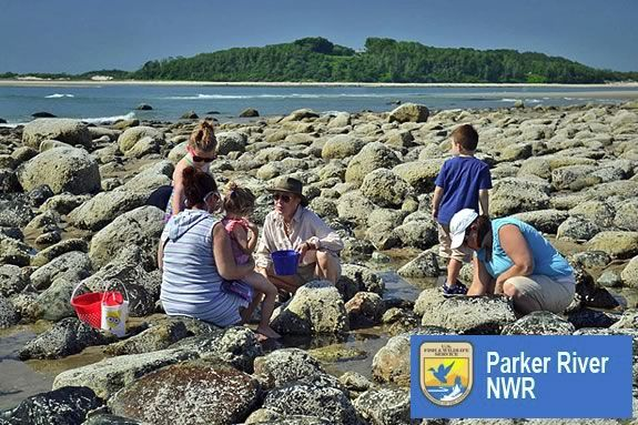 Kids will explore the tidal pools of Parker River National Wildlife Refuge with a park ranger in Newburport
