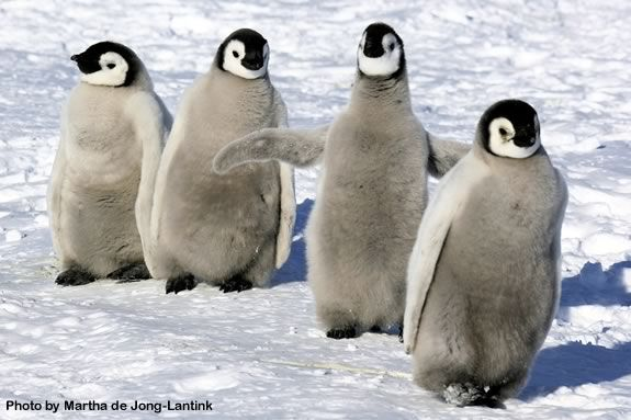 Kids will learn all about Antarctic Penguins at the Joppa Flats Center