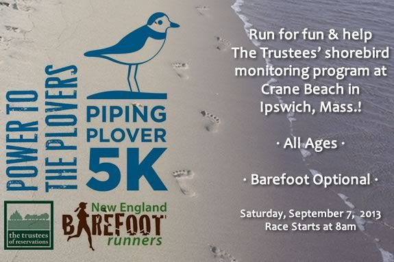 Run for fun and help raise funds for the Trustees' Shorebird Monitoring Program!